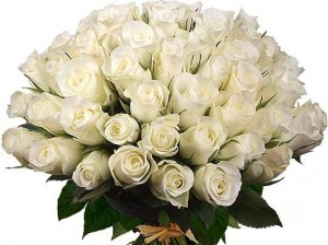 Трояндова чистота й ніжність